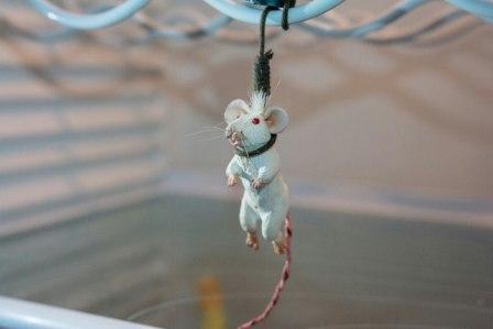 мышь в холодильнике